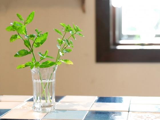 部屋の中に植物が飾られている